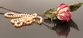 Dried Rose with Pearls. Single dried red rose lying next to pearl necklace Stock Photography