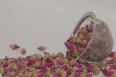 Dried rose petal flower on isolate white background.Blurred close up dried roses flower tea on white background. stock image