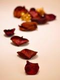 Dried rose petals. A closeup photo of dry rose petals Stock Images