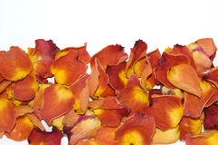Dried rose petals. Close-up on white background Royalty Free Stock Photography