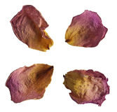 Dried rose petals Stock Photo