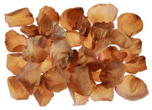Dried rose petals Royalty Free Stock Photography