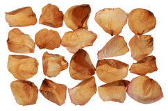 Dried rose petals Royalty Free Stock Photos