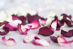 Dried Rose Petals and Bokeh. Dried rose petals on a wood grain surface with bokeh lights in the background Stock Photography