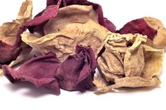 Dried rose petals - close-up. A pile of dried rose petals isolated on white Royalty Free Stock Photography