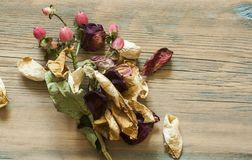 Dried rose petals. On wooden background royalty free stock photography