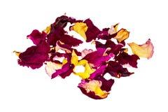 Dried rose petals. Flower tea stock photography