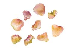 Dried rose petals isolated on white. Dried rose petals on white background, closeup shot royalty free stock photos
