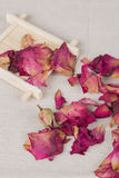 Dried rose petals for natural herbal drink. Royalty Free Stock Photo