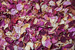 Dried rose petals in shades of red and pink Stock Image
