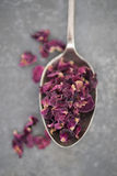 Dried Rose Petals on Spoon Stock Image