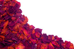 Dried rose petals wave Stock Photography