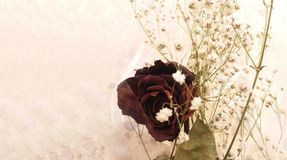 Dried rose with some white flowers for background. Copy space stock photography