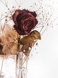 Dried rose with some white flowers for background. Copy space royalty free stock photos