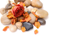 Dried rose and stone Stock Photo