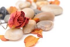 Dried rose and stone Royalty Free Stock Photography