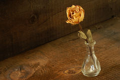 Dried Rose Stock Images
