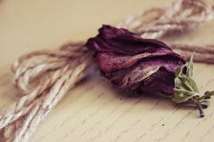 Dried rose on a white board with a cord. Dried rose with a cord on a white board.n stock photo