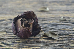 Dried Rose on wooden background, broken heart concept Stock Image