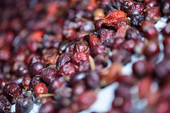 Dried rosehip berries Royalty Free Stock Photo