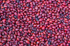 Dried rosehips Royalty Free Stock Photo