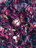 Dried rosella. Flower royalty free stock photos