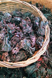 Dried roselle Stock Images
