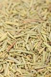 Dried Rosemary Close-up Stock Images