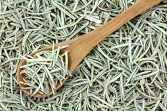 Dried Rosemary Stock Photos