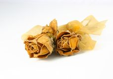 Dried Roses. Dried yellow roses in memory of a precious moment stock image