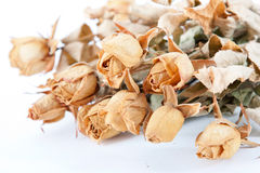 Free Dried Roses Stock Image - 17265311