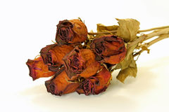Dried Roses. Bunch of dried roses with stems and leaves; white background Stock Photo