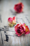 Dried roses stock photography