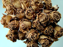 Dried Roses. Wedding Bouquet of flowers of dried roses Royalty Free Stock Photo