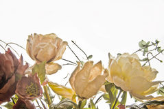 Dried roses Royalty Free Stock Photo