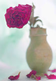 Dried roses in a antique vase Royalty Free Stock Photo