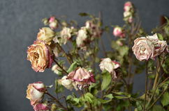 The dried roses with background Royalty Free Stock Photography