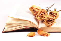 Dried roses on a book over white Royalty Free Stock Images