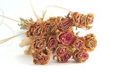 Dried roses bouquet. Dried flowers bouquet lying on white background Royalty Free Stock Photography
