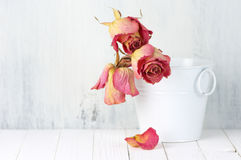 Dried roses in bucket Royalty Free Stock Images
