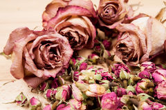 Dried roses and buds Stock Photos