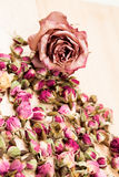 Dried roses and buds Stock Photography