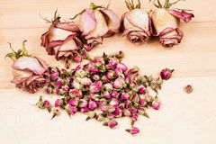 Dried roses and buds Stock Images