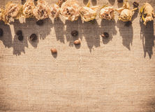 Dried roses and coffee Stock Image