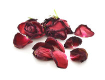 Dried roses isolated on white background Royalty Free Stock Photo