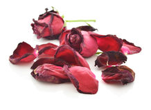 Dried roses isolated on white background Stock Image