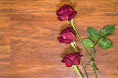 Dried roses on laminate floor Royalty Free Stock Image