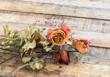 Dried roses on old wooden background Royalty Free Stock Images