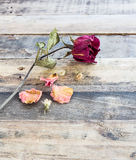 Dried roses on old wooden background Stock Images