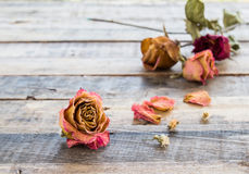 Dried roses on old wooden background Stock Photos